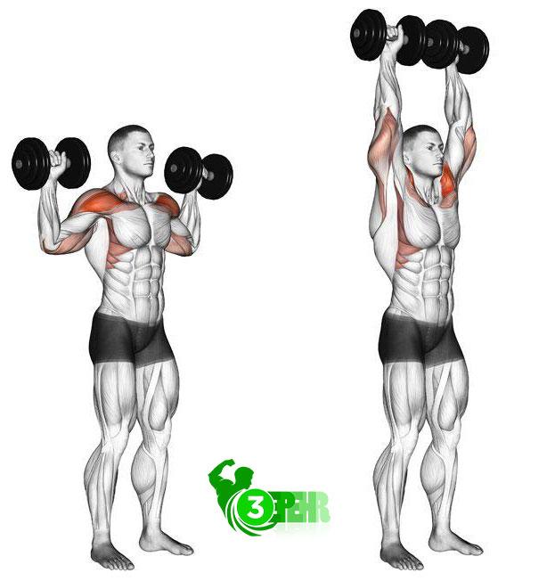 10 حرکت تا رسیدن به تناسب اندام در منزل ،پرس سرشانه دمبل ، آناتومی حرکت پرس شانه و عضلات درگیر آن در این حرکت